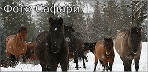 Photo Safari